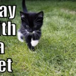 Play with a Pet (Tips to be More Relaxed – 4 of 31)