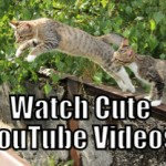 Watch Kittens on YouTube (Tips to be More Relaxed – 14 of 31)